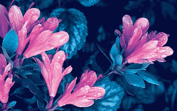 droplet_flowers_pink-blue_1680x1050-web